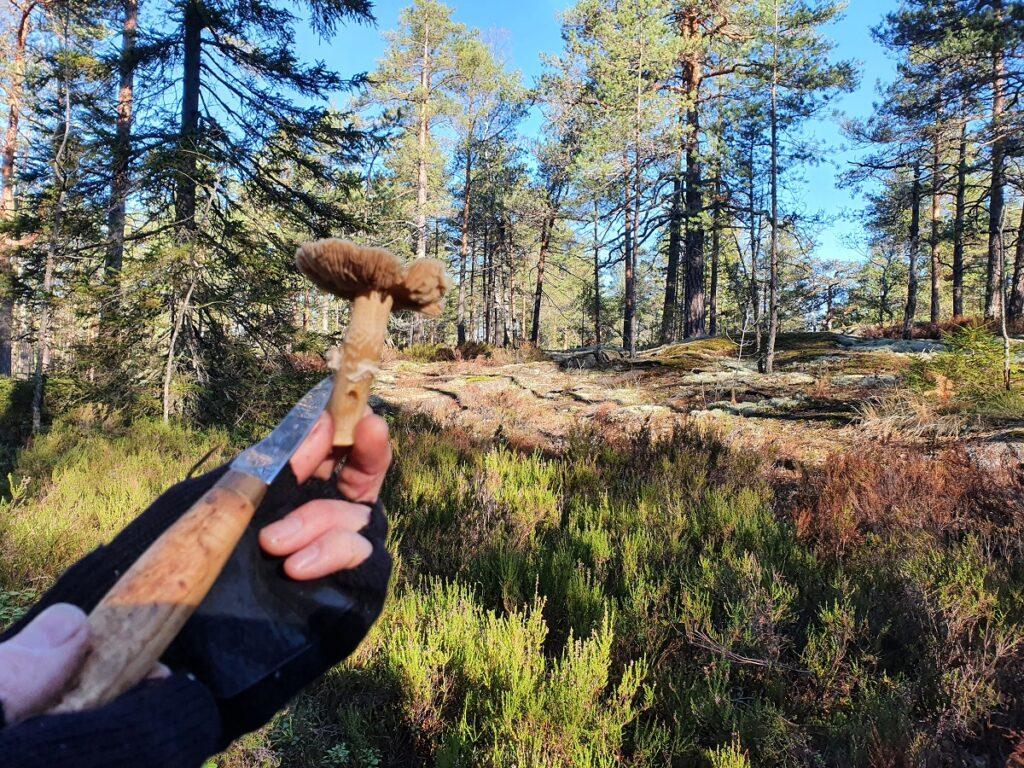 paddenstoelen zoeken in Finland